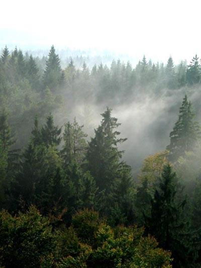Mgła nad Wieżycą