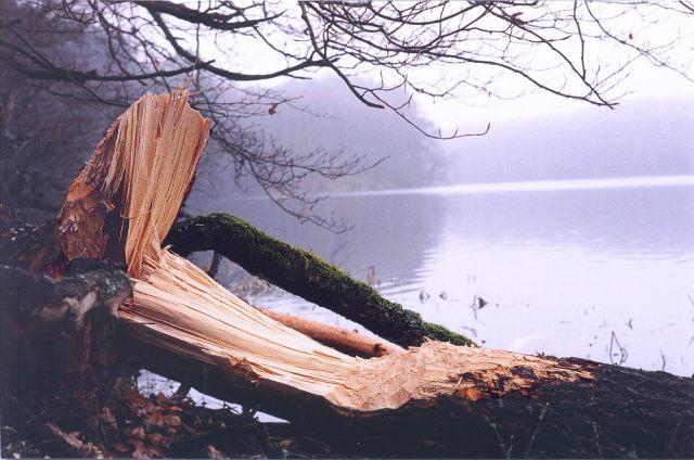 Bobrzy zgryz przy Wdzydzkim jeziorze