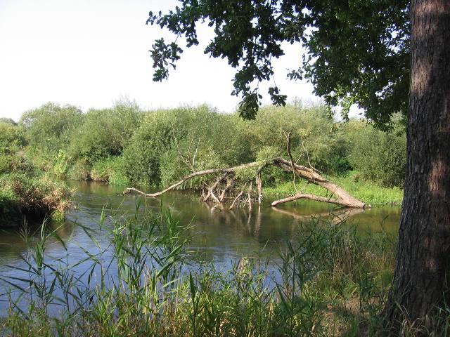 Rzeka Wierzyca koło m.Dębina