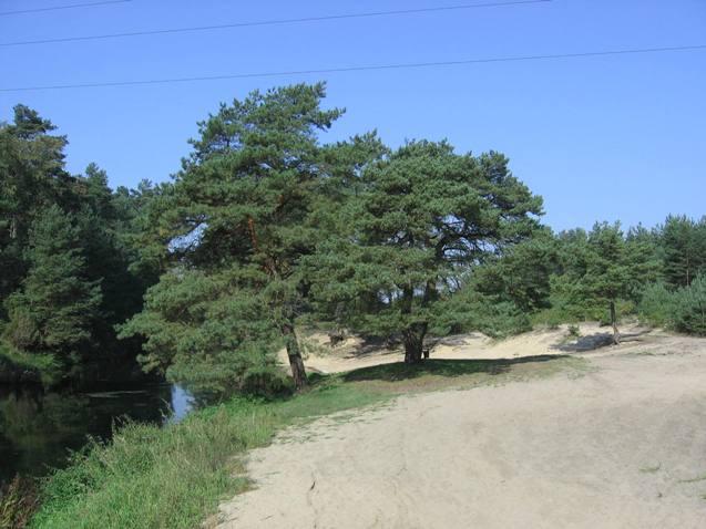 Wielki Kanał Brdy w okolicach m. Rytel  - plaża