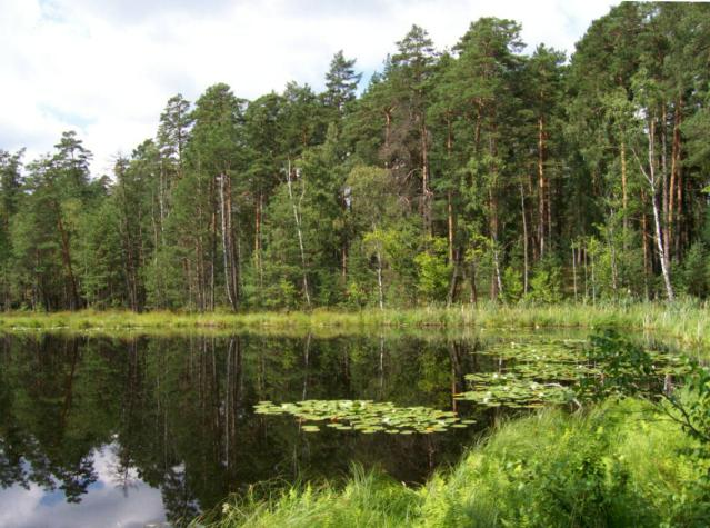 Jezioro dystroficzne Kacze Oko