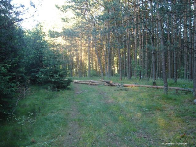 Las. Gołubie Kaszubskie