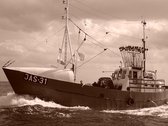 JAS-31