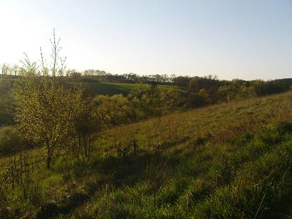 Okolice Chojnic