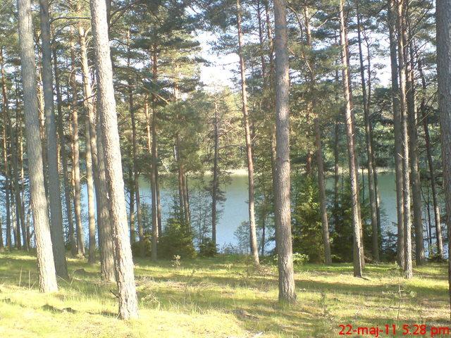 Jezioro Głuche D. i las