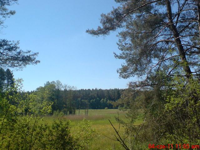 Las nad Brdą