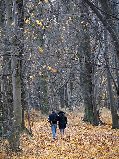 Parkowa ścieżka nad klifem w Kolibkach