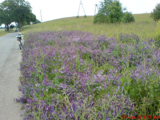 Kwiaty na Szlaku KA
