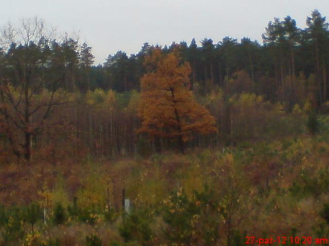 Jesień na Kaszubach (KnK)