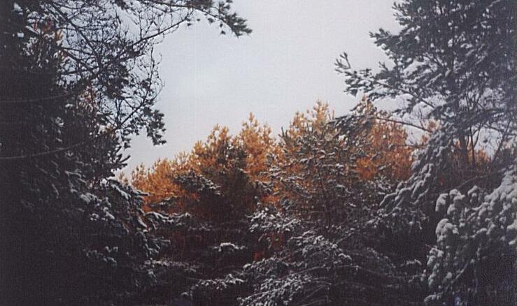 Słońce maluje drzewa