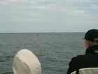 Pielgrzymka rybacka 15 (3283)