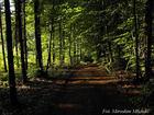 Leśna droga w kościerskich lasach.