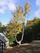 Kalwaria jesienna06