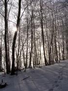 Borucino - las nad Radunią