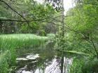 Rzeka Stążka w m.Gołąbek  1