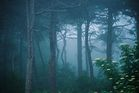 Kuźnicki las nad ranem