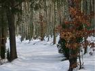 Zima nad Jeziorem Gwiazdy- Borowy Młyn