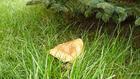 Bogactwo kaszubskiego lasu - rydz
