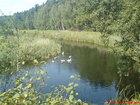 Rzeka Brda i łabędzie
