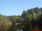 Jeziorko leśne i las...