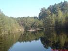 Jeziorko leśne