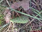 Zielona szyszka w lesie