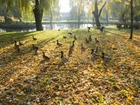 Lębork jesienią