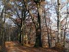 Gdynia - zespół dworsko-parkowy w Kolibkach
