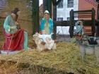Szopka bożonarodzeniowa przed żukowską kolegiatą
