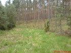 Kaszubskie lasy