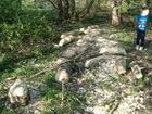 Bobry nad Trzebiochą (2918)